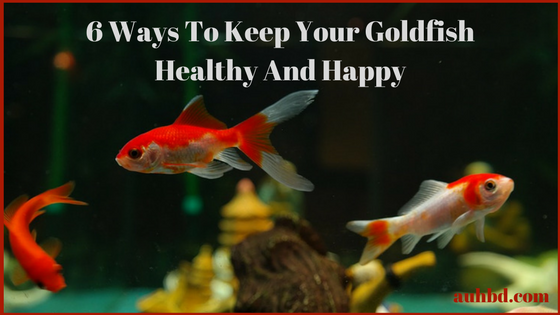 Keep Goldfish Healthy And Happy